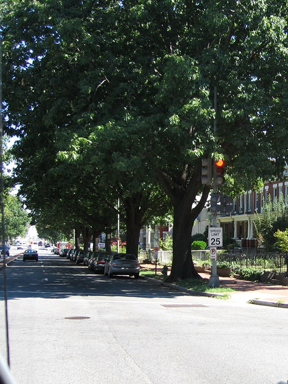 A stop light holds red; behind it trees and townhouses stretch down a side street of Washington D.C.