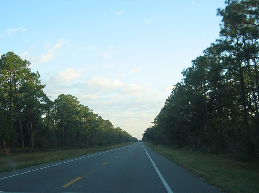 The road cuts through the trees; blue skies stretch out over the roadway