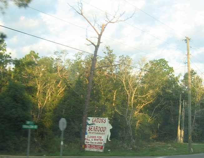 Road sign advertises Florida cuisine including seafood and gator.