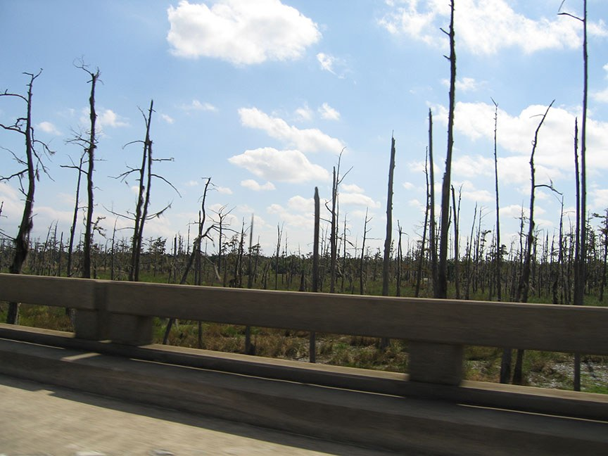 Bare trees stand tall just passed the edge of the highway and stretch for miles