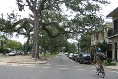 A bicyclist rides down the street of a quiet neighborhood in New Orleans; trees run down the center median and houses stand on either side of the street.