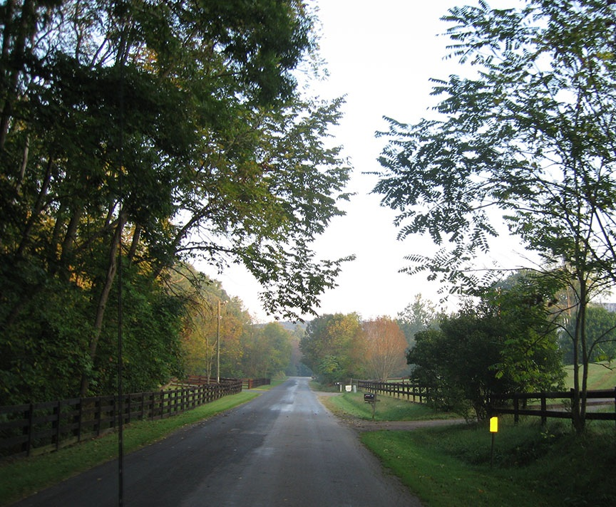 A quiet road leads straight through a residential neighborhood with fences and trees lining the street